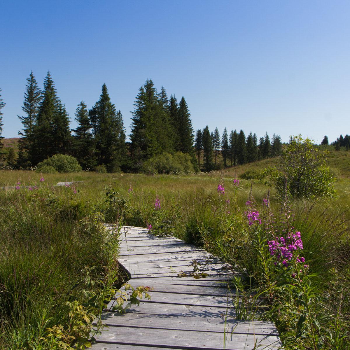 La Réserve Naturelle des Sagnes à La Godivelle
